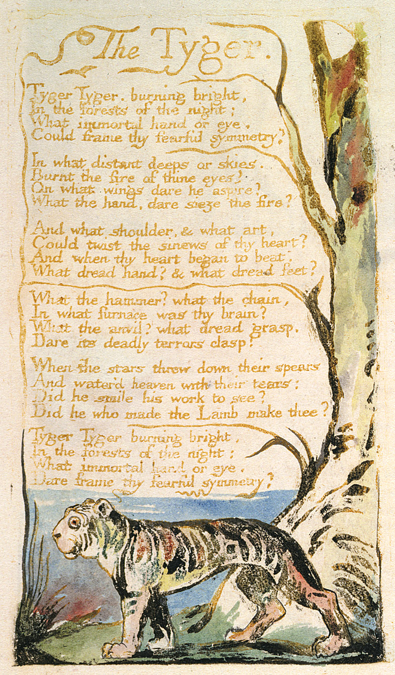 the tyger by william blake Dltk's poems the tyger by william blake tyger tyger, burning bright, in the forests of the night what immortal hand or eye, could frame thy fearful symmetry.